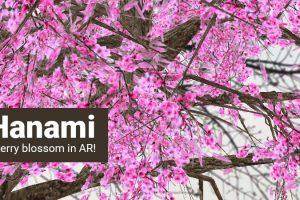 Cherry Blossom in Augmented Reality – AR Hanami App