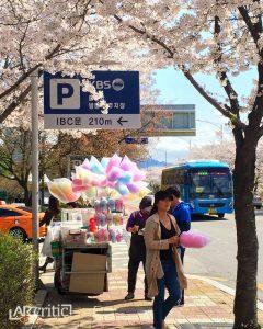 Cherry Blossom Festival, Seoul, South Korea